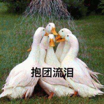 飞飞Fly~